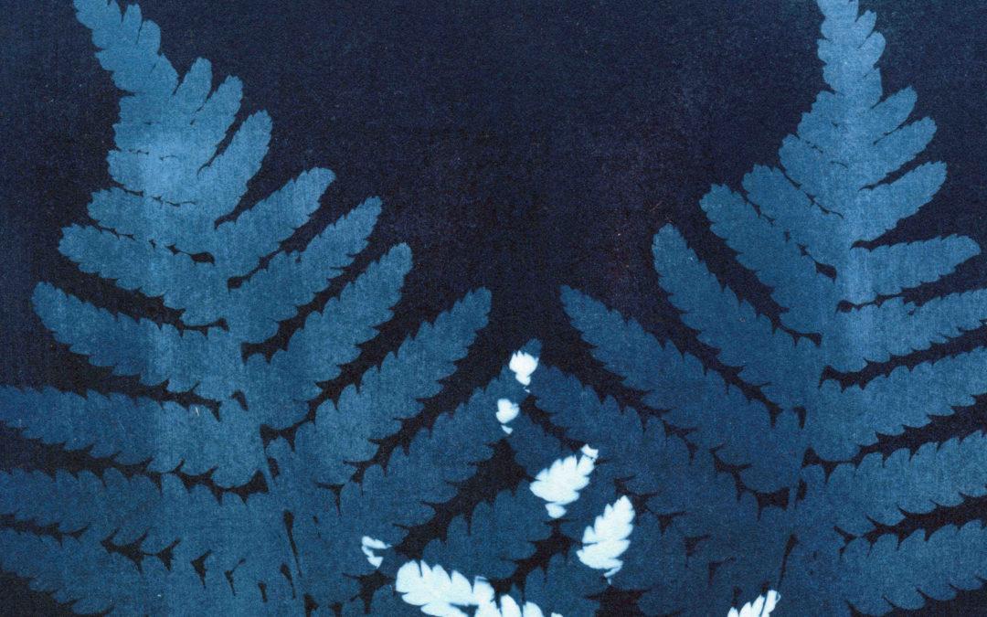 Cyanotypie – Ein Farnblatt / A Fern Leaf