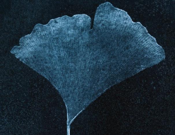 Cyanotypie – Ein Blatt / One Leaf